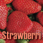E-Liquide Strawberri TJuice